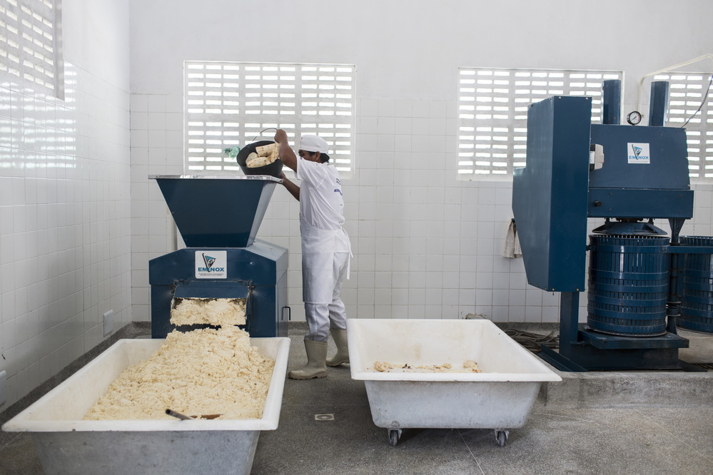 Kiriri man dumps cassava roots into a machine that shreds the roots and turned into flour at the cooperative, at Aldeia Marca‹o Kiriri, near Ribeira do Pombal, in the state of Bahia, Brazil, on Tuesday, April 12, 2016. The IFAD-funded Rural Sustainable Development Project in the Semi-arid Region of Bahia (Pro-Semi‡rido) has been working together with the Kiriri people to allow them to use their traditional knowledge and traditions as a foundation upon which to build their livelihoods.